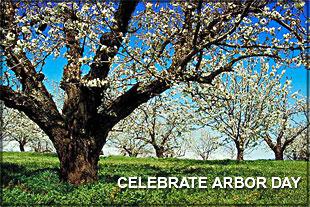 trees - photo clipart