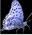 nice blue butterfly