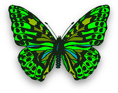 butterfly in bright greens