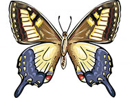 yellow and blue butterfly image