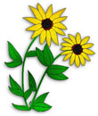 yellow daisy, Black-Eyed Susan - yellow flowers with green leaves